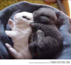 Quotes Funny Cute Rabbit Quotesgram