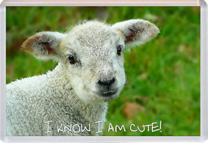 Details about Lamb/Sheep - Cute Quote - Jumbo Fridge Magnet - Gift ...