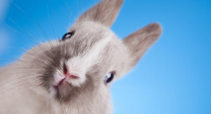 couple pets happy pet rabbit bonding with your pet rabbit happy pet ...