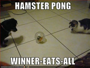 funny-pictures-cats-play-game-with-hamster.jpg