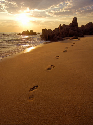 Footprints in the sand on beach near San José del Cabo, Mexico at ...