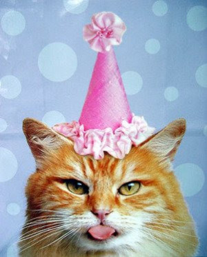 Cat Thursday - I survived another year.