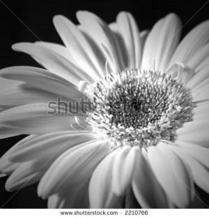 stock photo : black and white