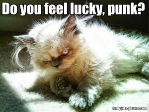 Funny Grumpy Cat Joke Picture