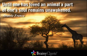 Until one has loved an animal a part of one's soul remains unawakened ...