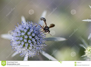 Funny Fly Collecting Pollen From Flower