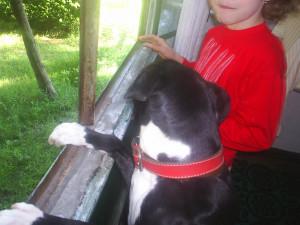 Pitbull Dog Sad Quotes American pit bull terrier