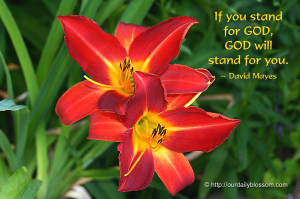 Tiger Quotes And Sayings Flower: red tiger lily