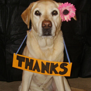 Thank You Funny Animal Pictures Funny animal t... thank you