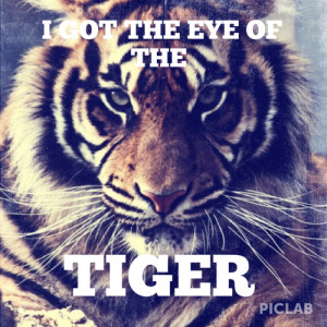... tags for this image include: animal, life, quotes, song and tiger