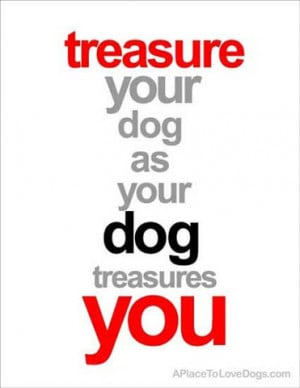 Cute Dog Lover Quotes Available here at Rover99 com