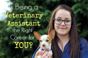 Is Being a Veterinary Assistant the Right Career for You?