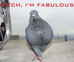 funny pigeon statement funny pigeon statement