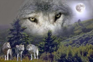 White Wolf: Women Who Run With the Wolves (Video)