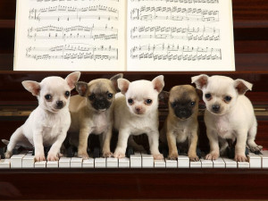 Funny Sayings Cute Animals Chihuahua Concerto Make You Smile Keep ...