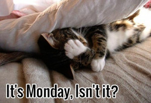 It is monday, Isn't it? Funny monday cat picture.