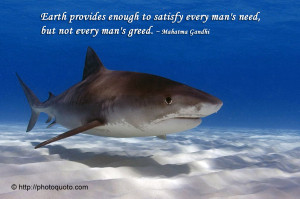 Shark Quotes