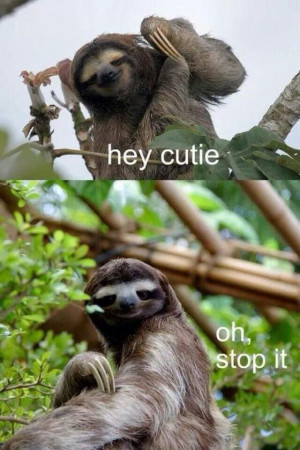 Cute sloth quotes quotesgram - Funny sloth pics ...