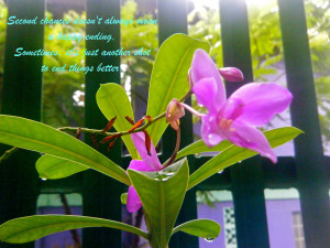Second Chance Bible Quotes http://flowerbless.blogspot.com/2012/03 ...