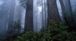 For Julia, entering the Redwoods for the first time was a