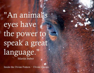 Divine Quotes ~ Animals and Nature