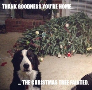 dog funny christmas tree fainted