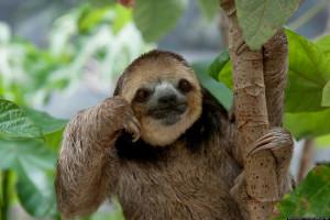 ... dirty sloth meme jokes dirty seal meme dirty sloth meme blank dirty