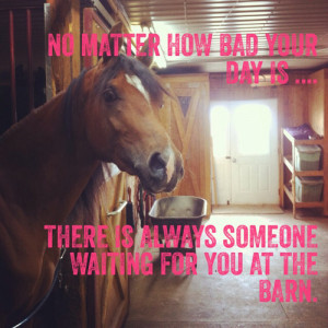 ... image include: equestrian, horse, equestrianisme, horses and quote