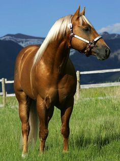 Cutting western quarter paint horse appaloosa equine tack cowboy ...