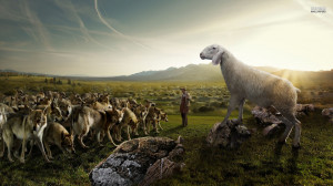 sheep attacking the wolves funny desktop wallpaper download sheep ...