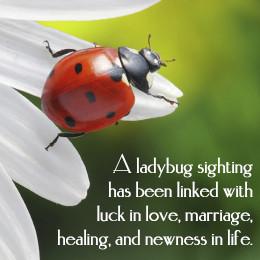 Significance of a ladybug sighting
