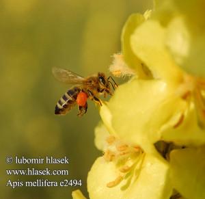 Honey Bee Quotes