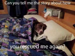 rescue dog cuddle