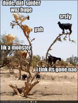 Funny-pictures-goats-discuss-spider-size