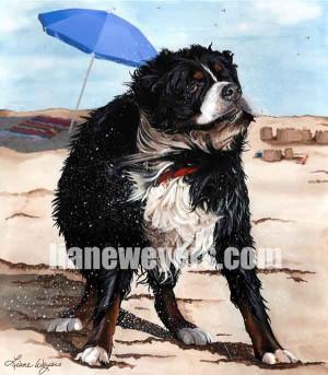 Dog Days Of Summer Bellingham