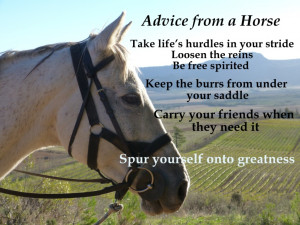 Great Advice from a Horse!