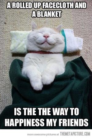 Funny Happy Cat Funny happy cat smile sleeping