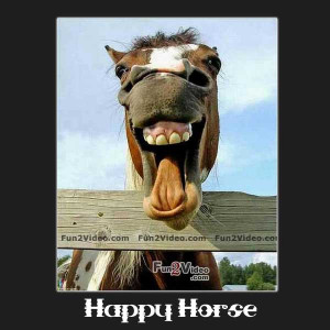 funny funny horse quotes and jokes free funny horse pictures
