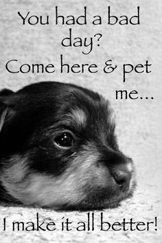 miss my dog more puppies dogs quotes true furbaby bad day furries ...