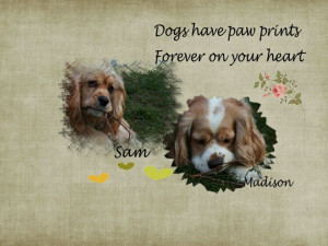 My Lovable American Cocker Spaniels,Sam and Madison...owners of my ...