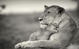 so cute lion cub an their mother, Wallpaper 1920 × 1200, click to ...