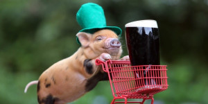 celebrating St. Patrick`s Day funny St. Patrick`s Day animals Funny St ...