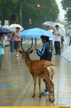 deer :: funny pictures :: rain :: umbrella