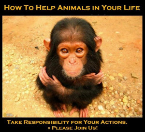 quotes about helping animals