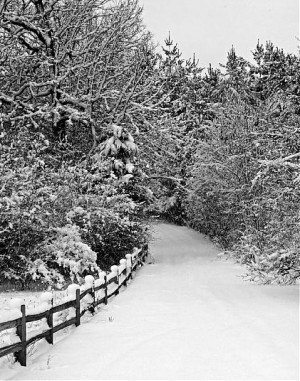 8155d1202060016-snowy-morning-imgp1614_edited-1-copy-copy.jpg#snowy ...