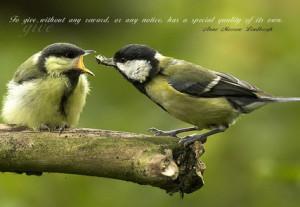 Sayings with birds, bird sayings