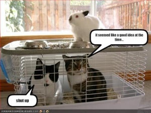 ... -cute-bunny-pictures-funny-pictures-cats-trapped-rabbit-cage.jpg