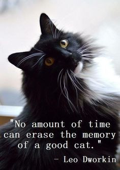 Love everlasting. Looks just like one of my prior kitty-Spooky, still ...