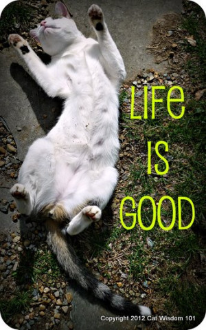 life-is-good-cute-cat-quote-cat-wisdom-101.jpg