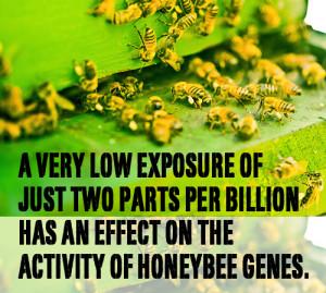 Einstein Honey Bee Quote